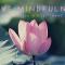 I love Mindfulness – mindfulness in 8 settimane